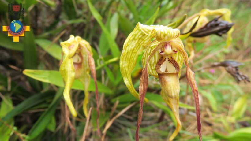 a-type-of-orchid-on-the-Inca-Trail-short-2-days-to-machu-picchu